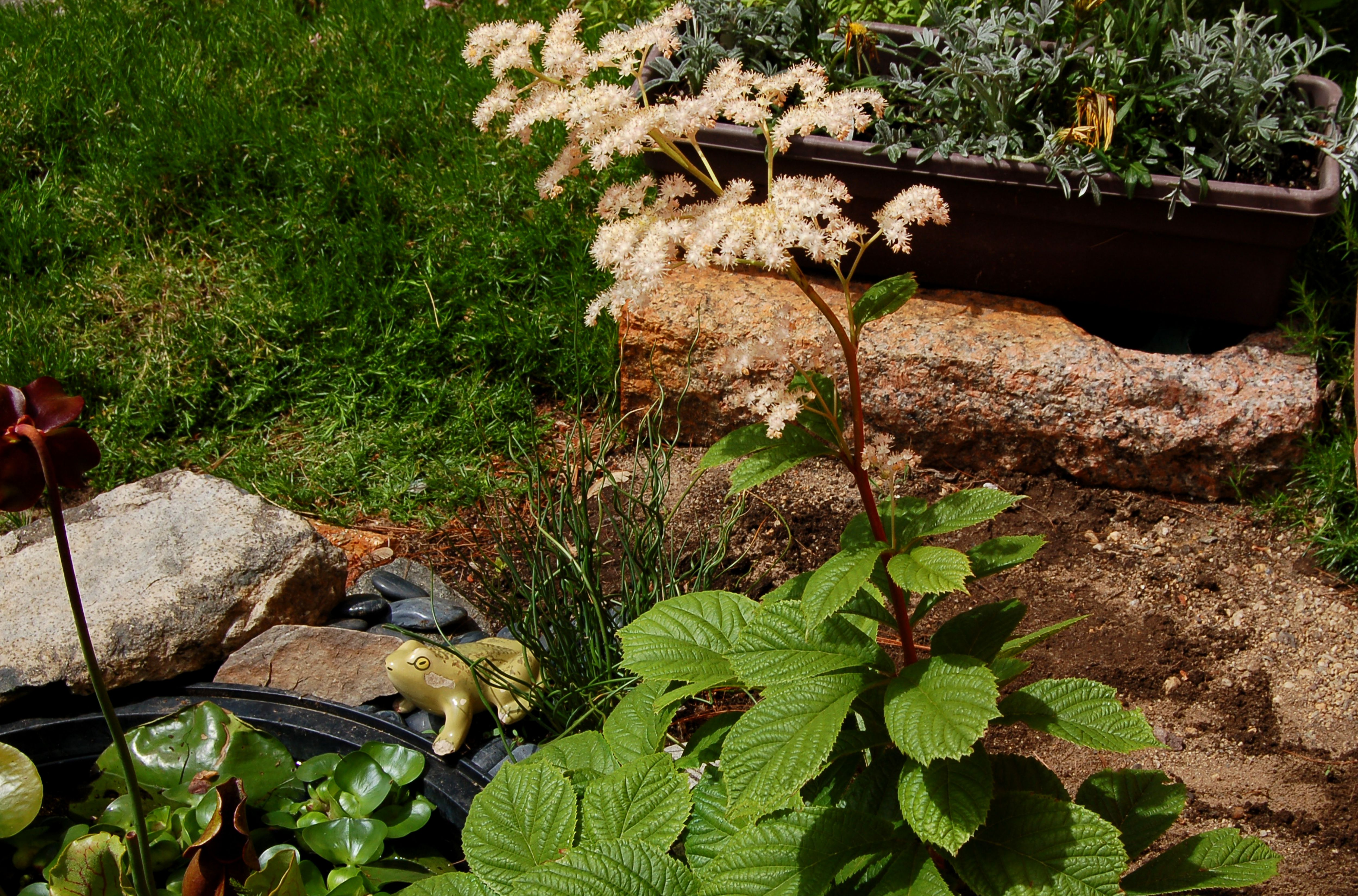 12 Great Perennials For Shade And How To Grow Them