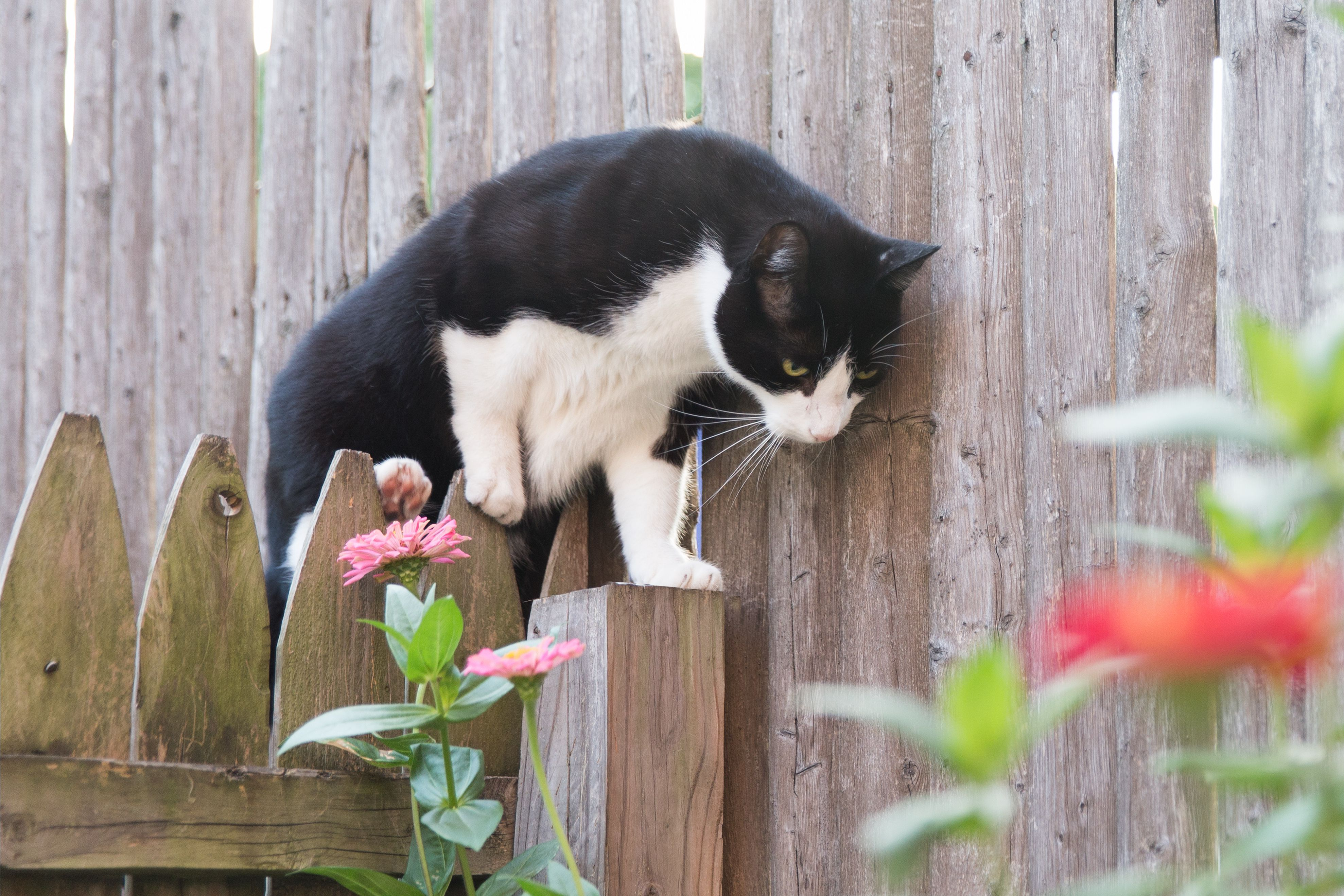 How To Get Rid Of Stray Feral Cats