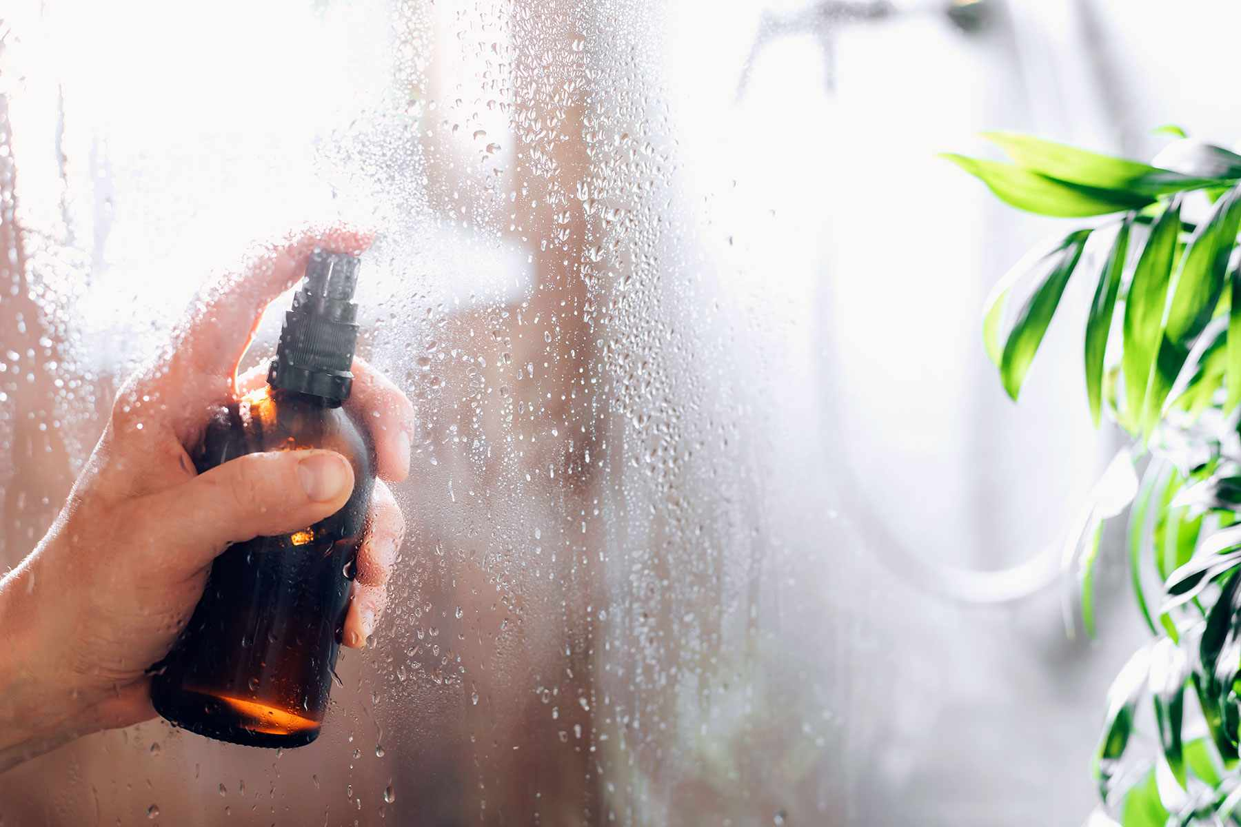 Cleaning solution sprayed on glass shower door to prevent mildew growth