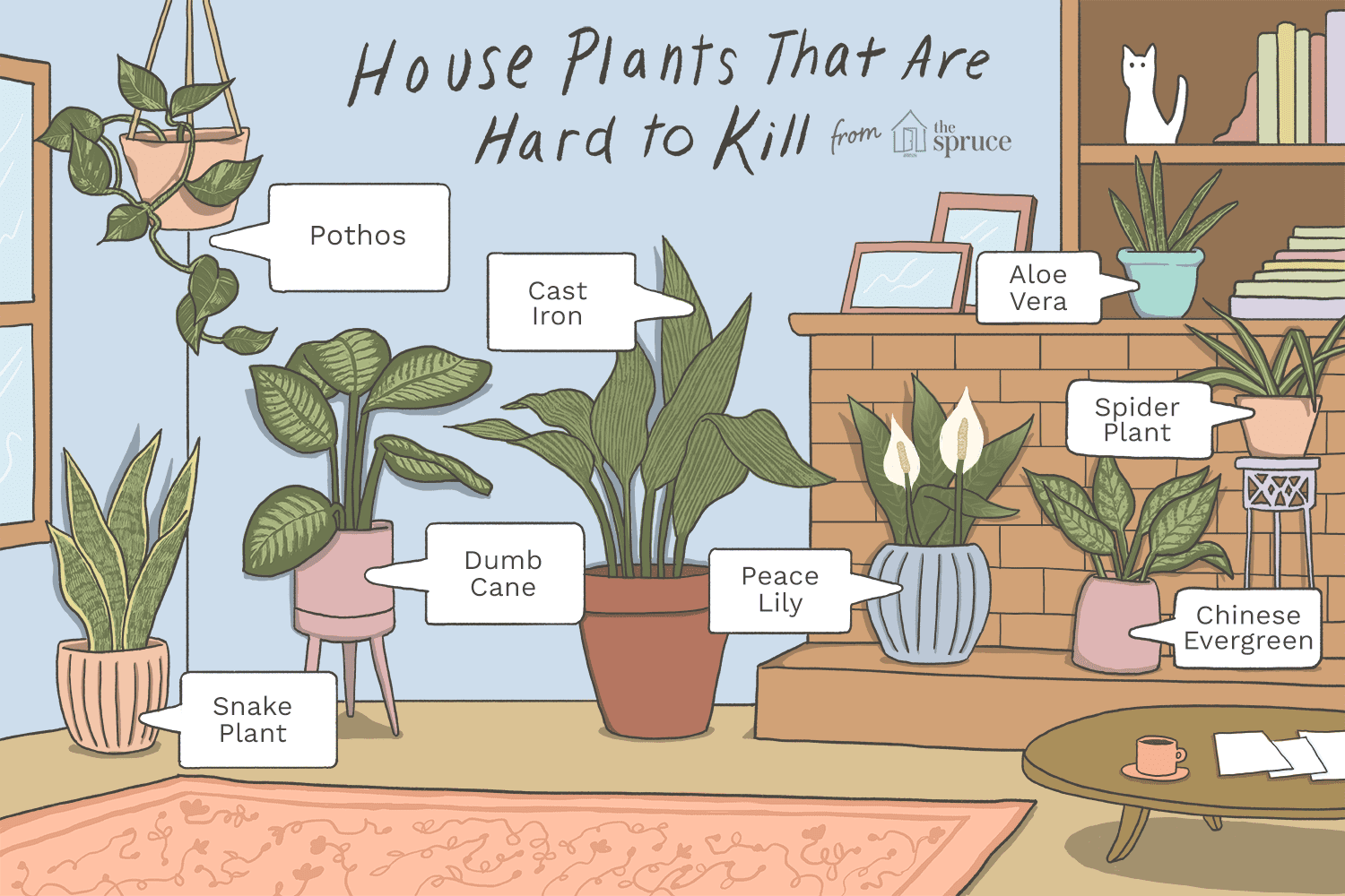 6 Houseplants Anyone Can Grow on colorful house plants, non-toxic house plants, small house plants, soothing house plants, robust house plants, weather proof house plants, hypoallergenic house plants, fragrant house plants, lightweight house plants, compact house plants, organic house plants, portable house plants, rugged house plants, elegant house plants, night blooming house plants, refreshing house plants, cool looking house plants, inexpensive house plants, strong house plants, easy to maintain house plants,