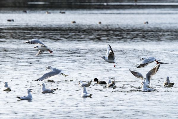 sea-faring birds
