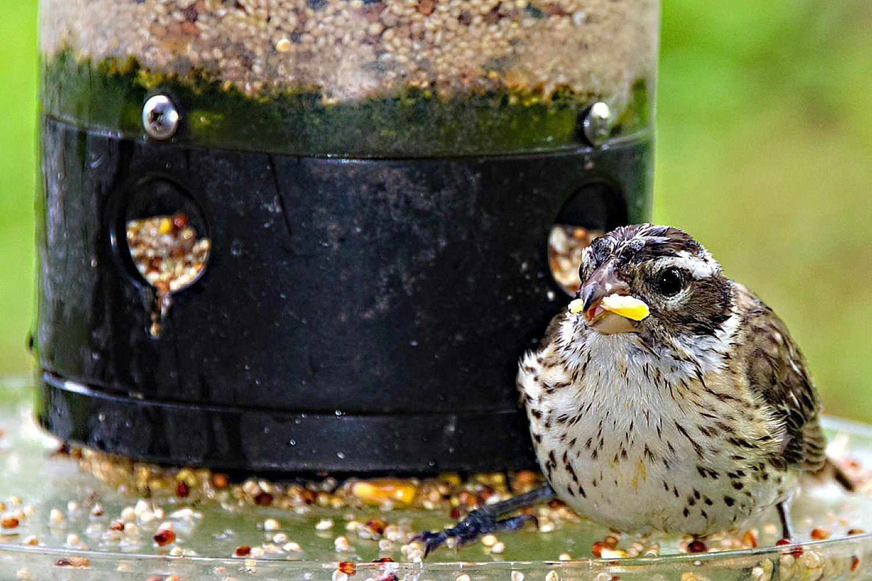 Keeping Birdseed Dry In The Rain