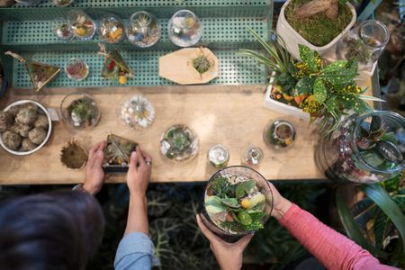 10 Easy To Grow Terrarium Plants