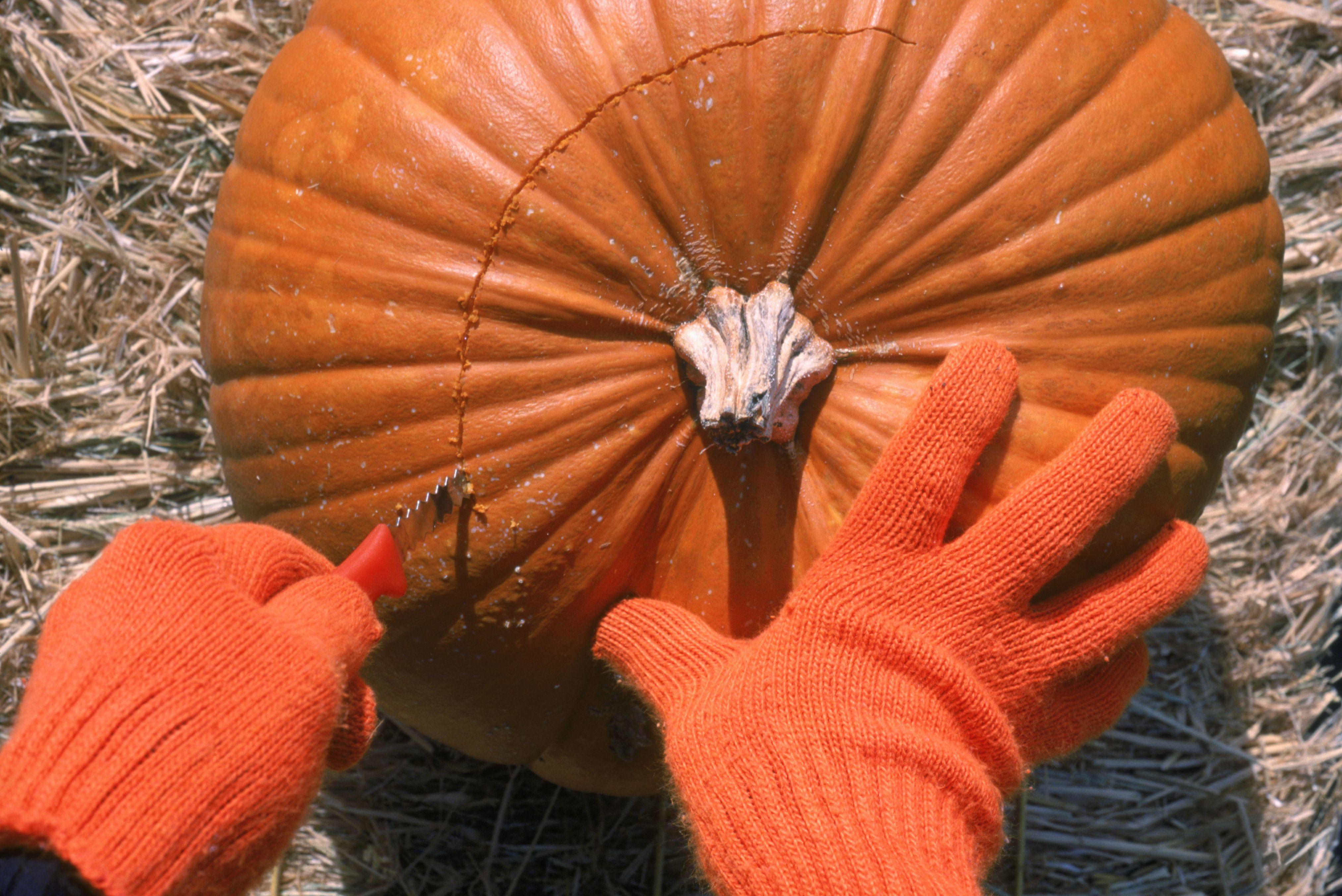 Person cutting open pumpkin