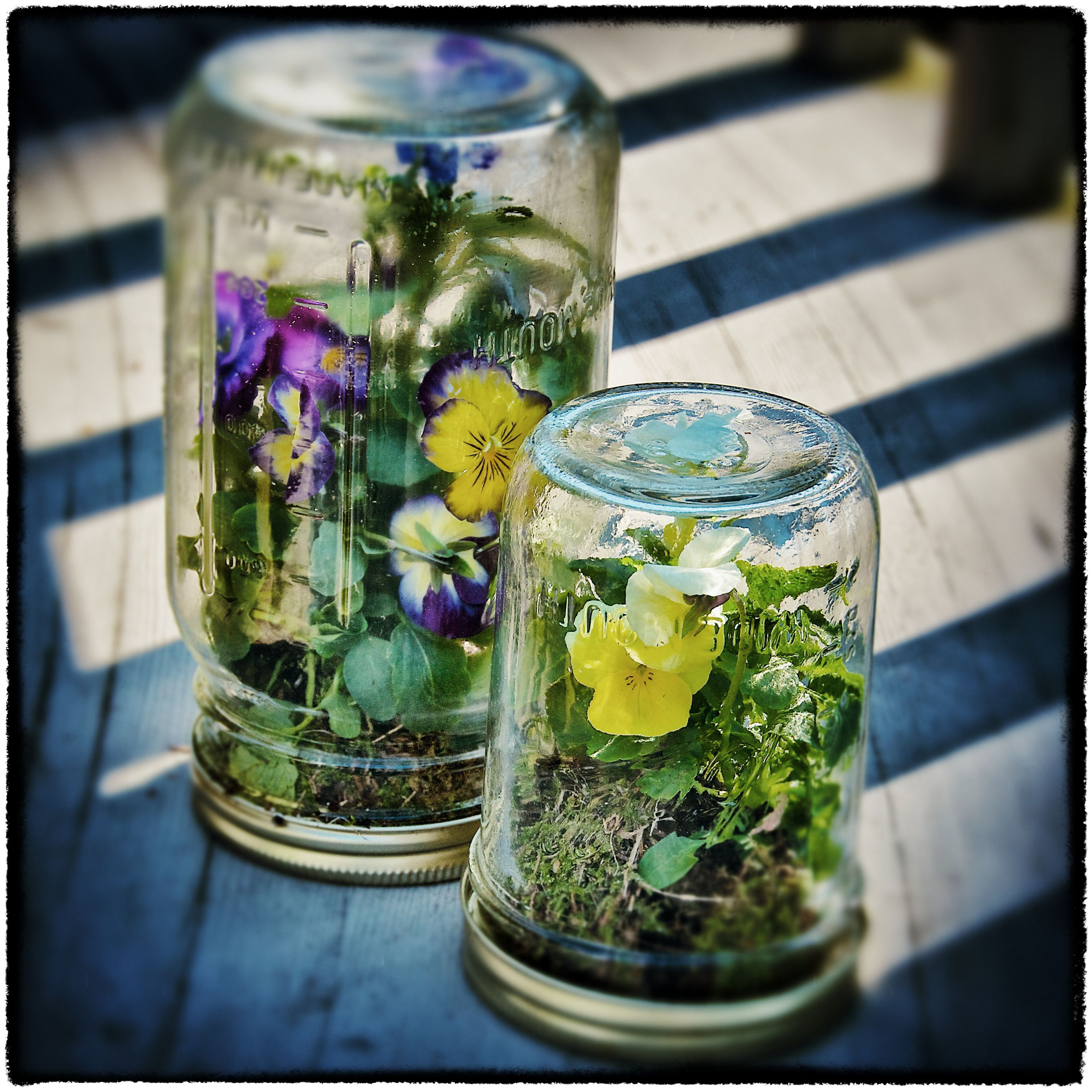 jar decoration ideas.htm how to make a mason jar terrarium  how to make a mason jar terrarium