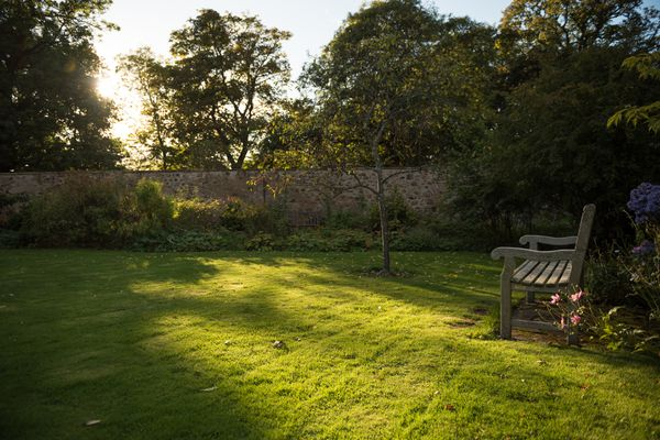 lawn with wooden bench in the evening