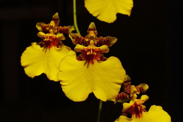 The Types Of Orchids And Identification Photos