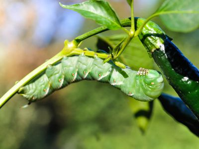 5 Easy Ways to Keep Insect Pests Out of Your Vegetable Garden