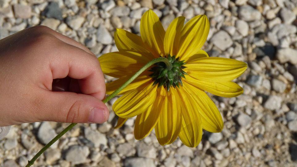 Child holding flower