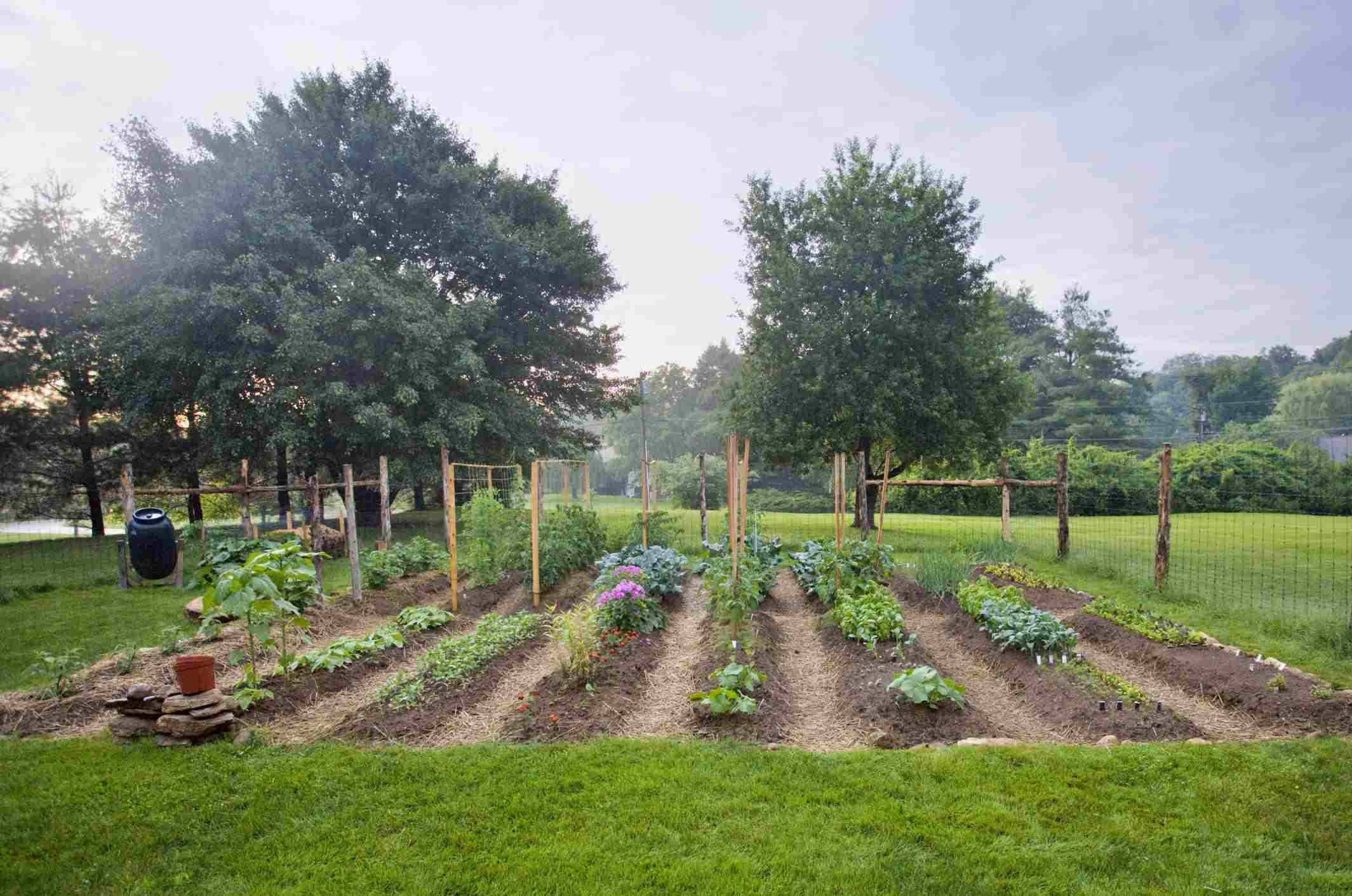 Vegetable garden with seedlings
