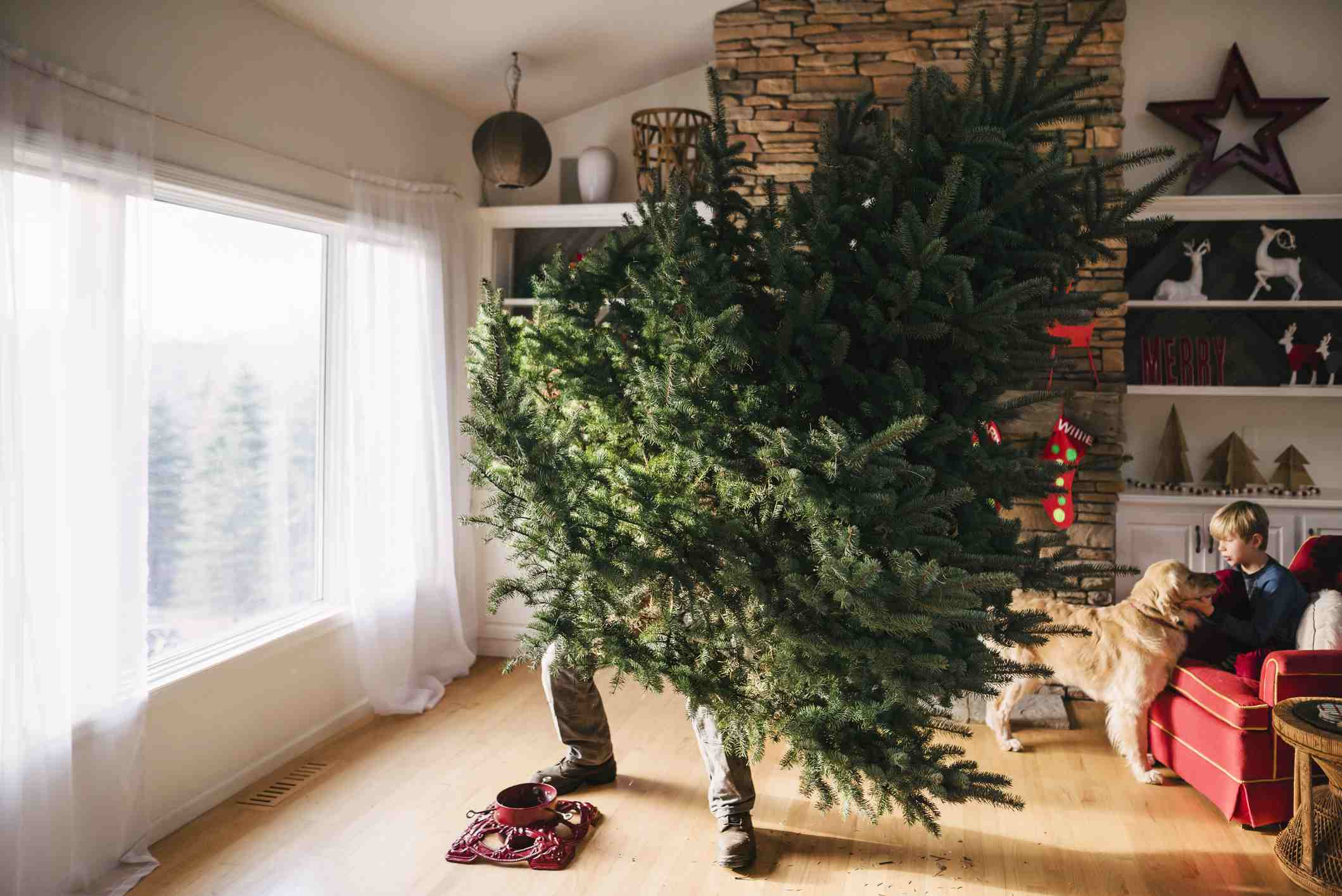 Walmart. Christmas tree setup