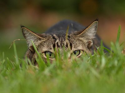 How To Get Rid Of Stray Cats In Your Backyard how to keep stray cats out of your yard - safely