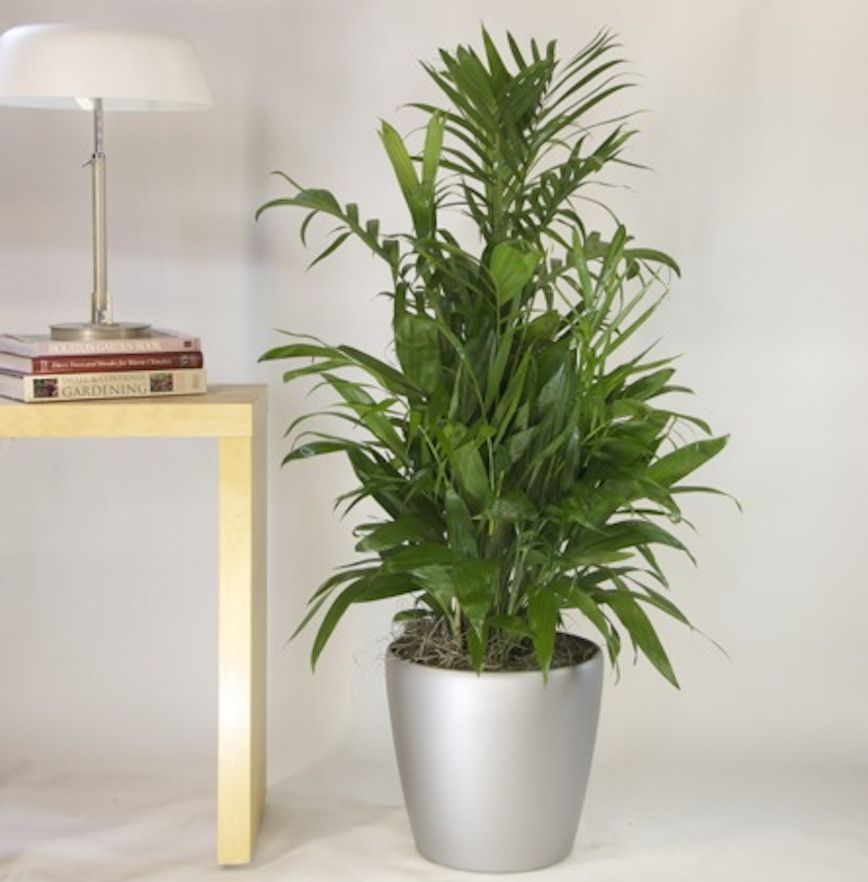 10 Air Purifying Plants For Feng Shui