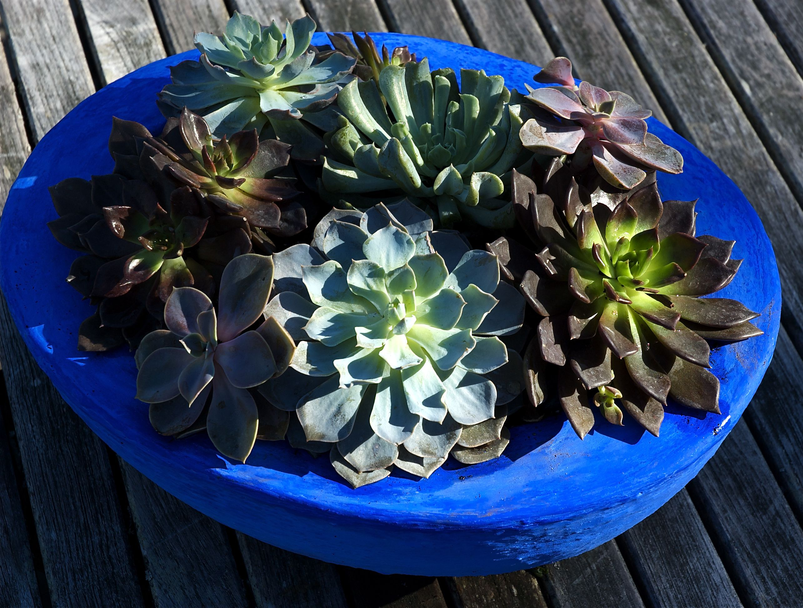 container garden with succulent planter