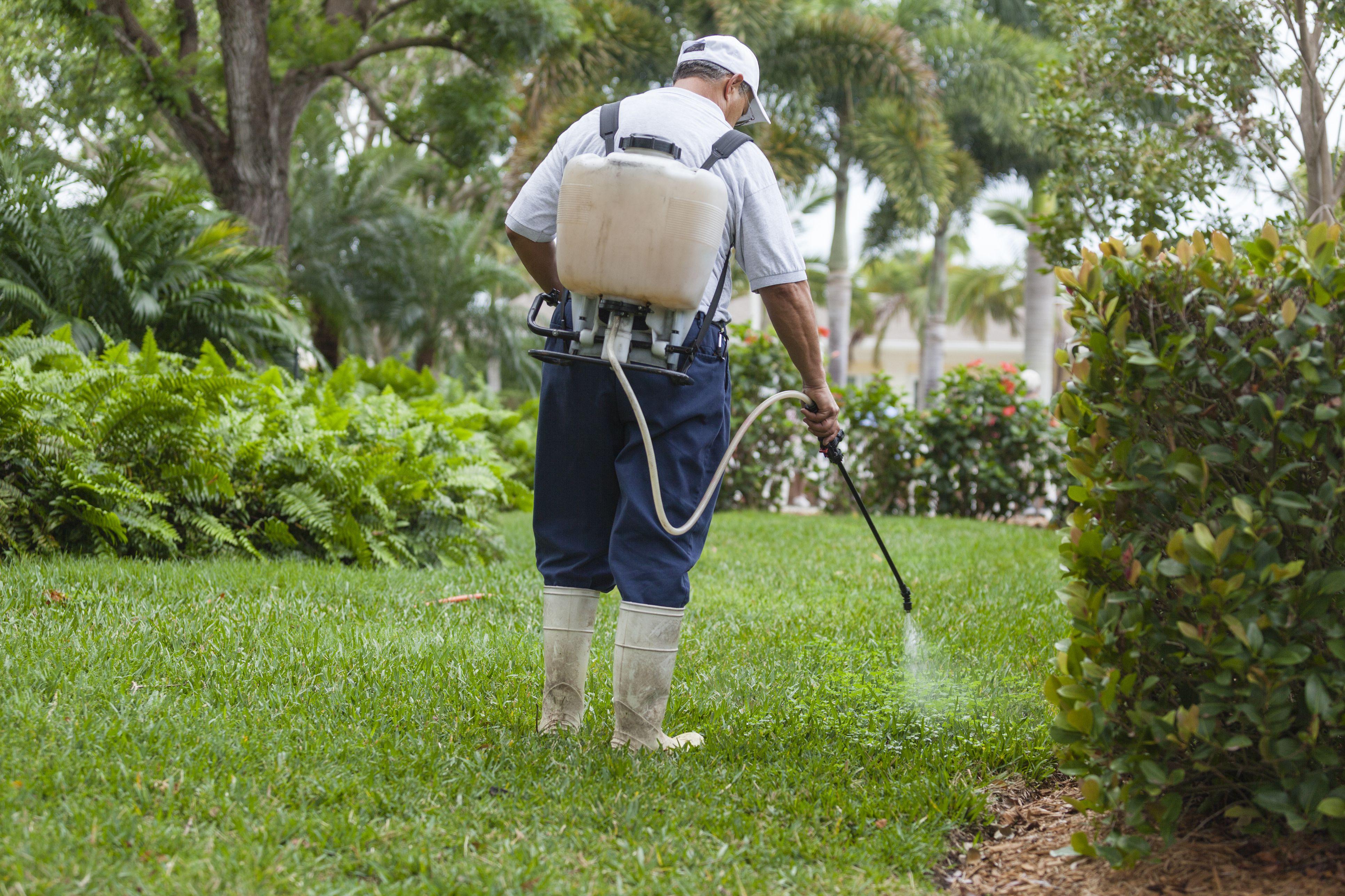 Broadleaf Weed Control The Organic Way
