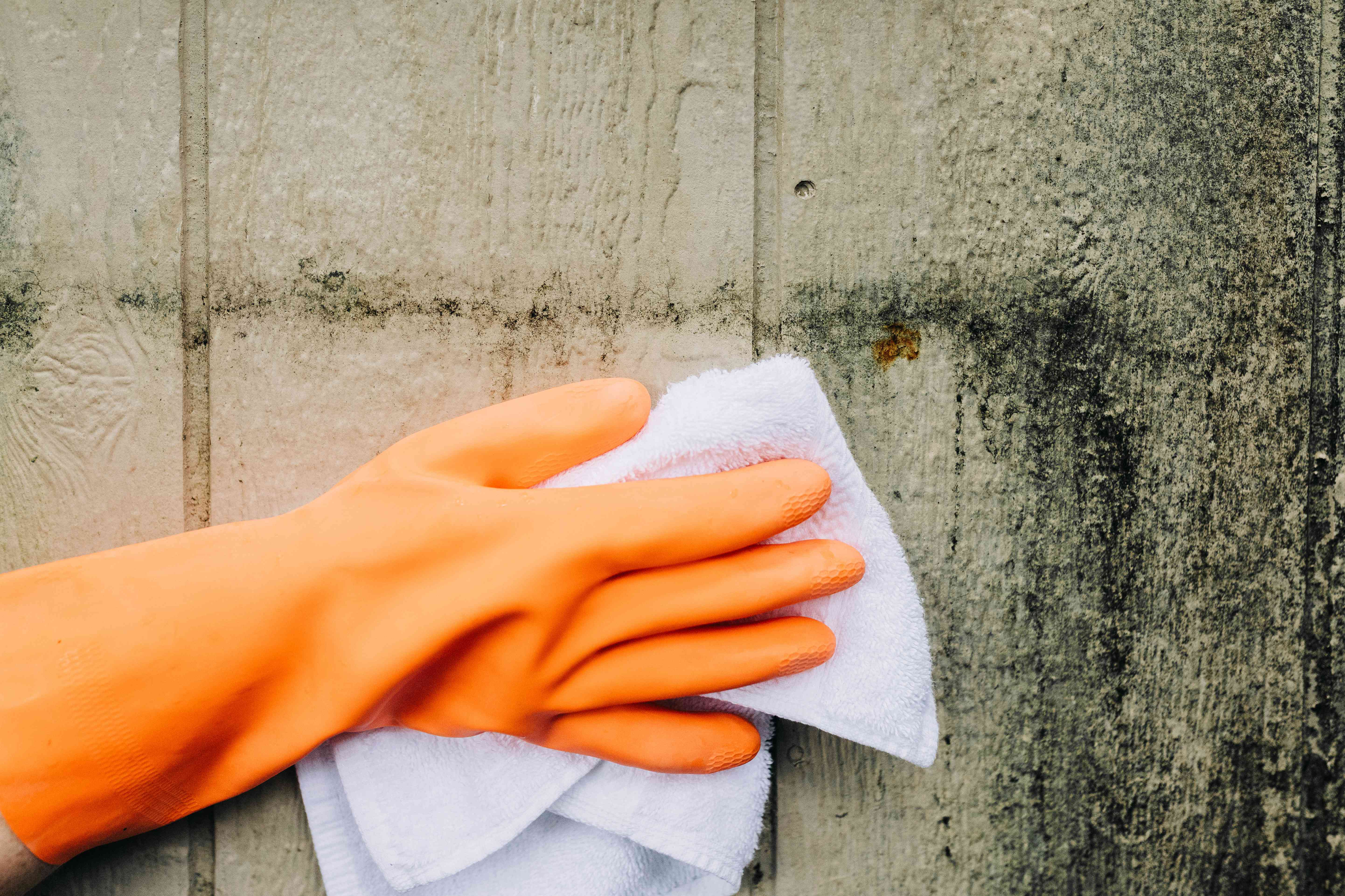 White towel soaked with chlorine bleach rubbing off moldy wood with orange gloves