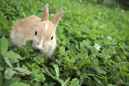 Rabbit On C