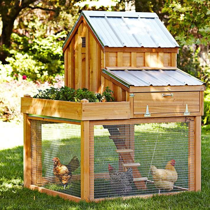 Williams Sonoma Cedar Chicken Coop
