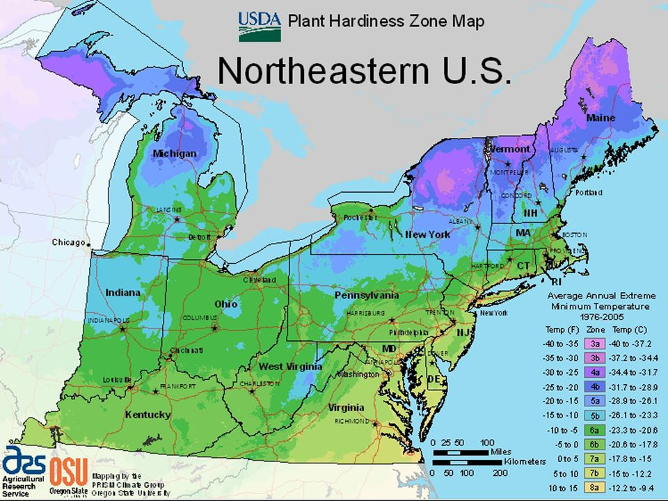 Image: USDA growing zone map for the North East U.S.