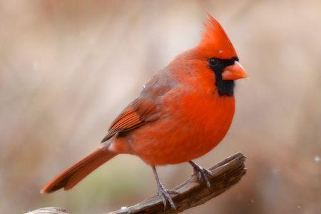 red bird symbolism