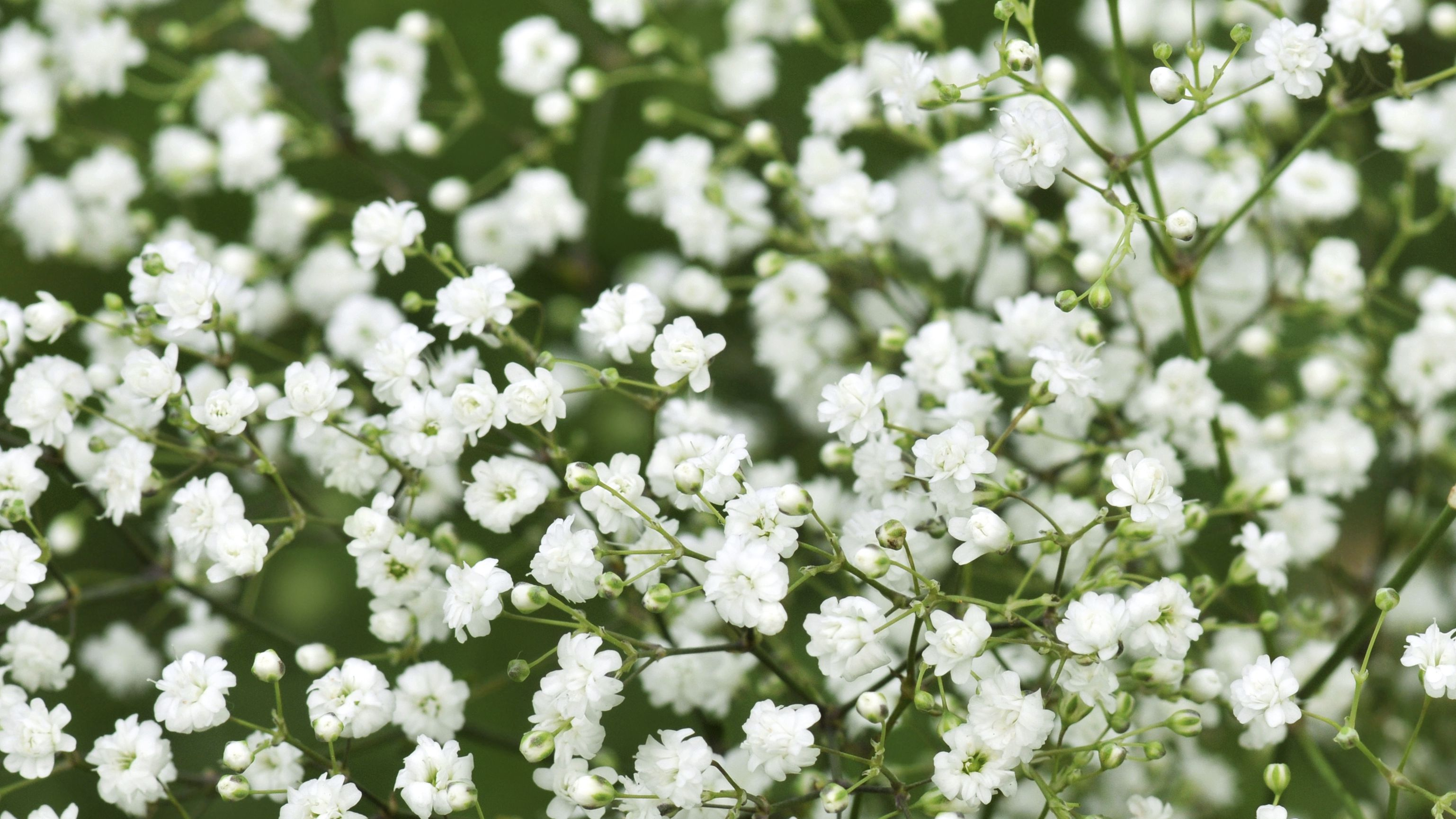 9 Best Tiny Flowers for Your Garden