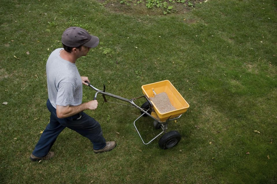 Landscaper Fertilizes a Lawn