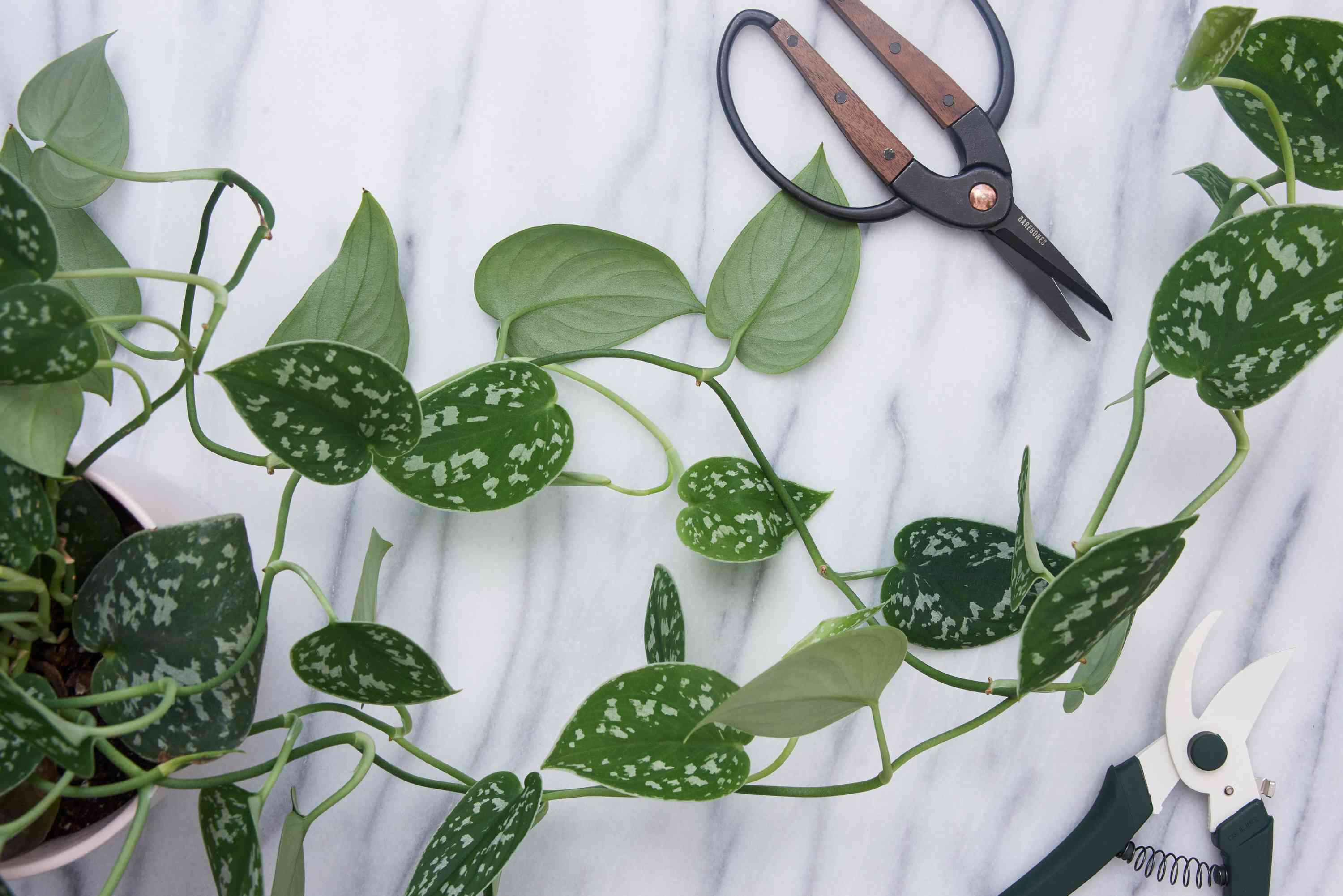 houseplant pruning materials