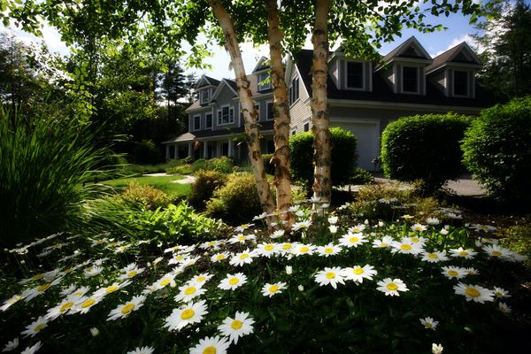 Trees and flowers in front of a house