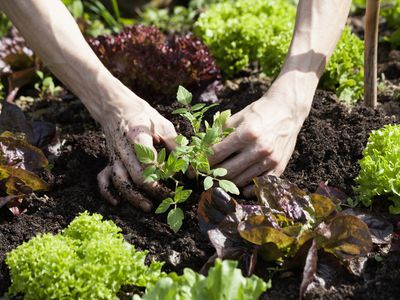 Can You Plant Any Flowers or Vegetables in January?