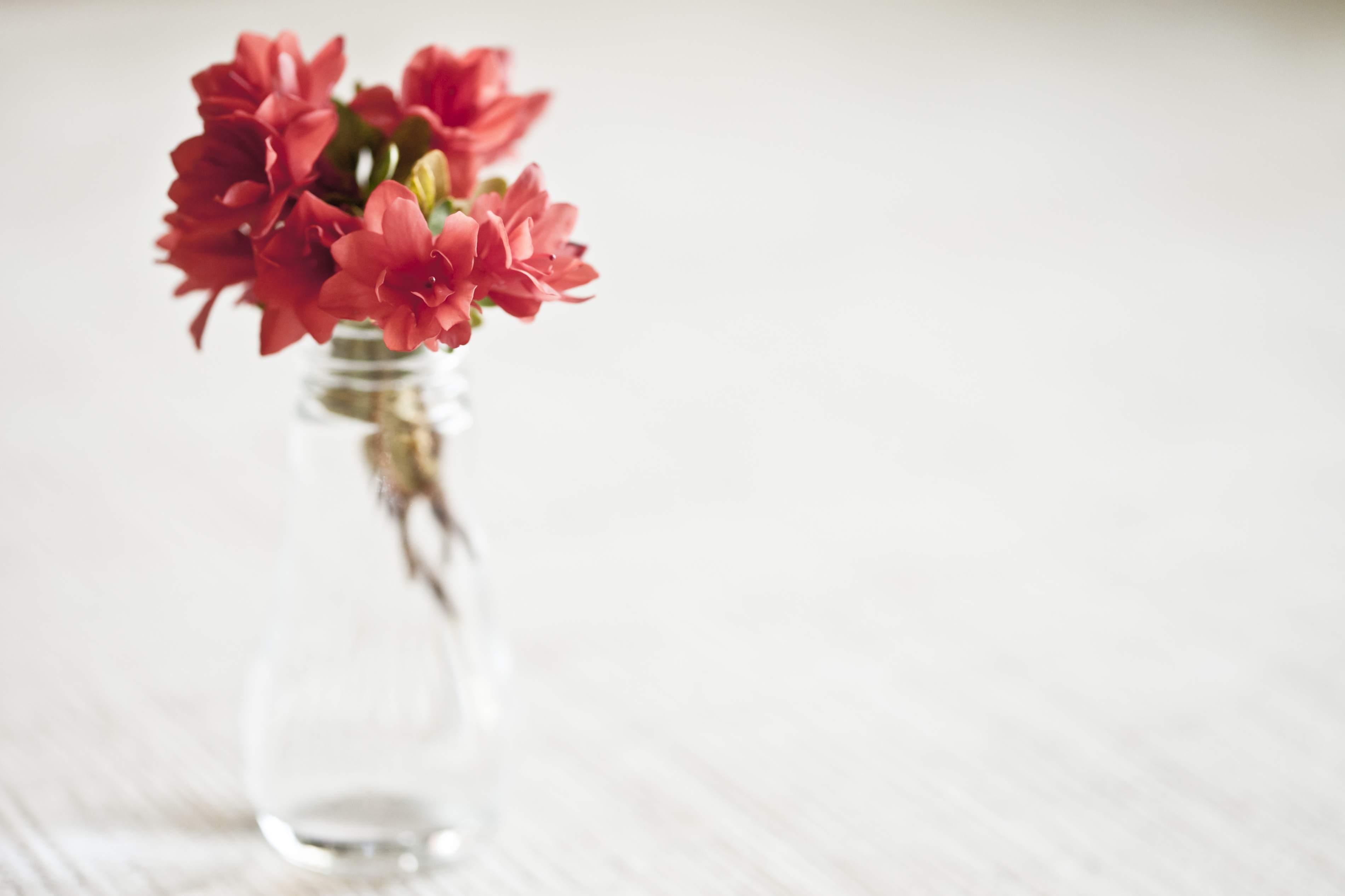 Azaleas en un vaso