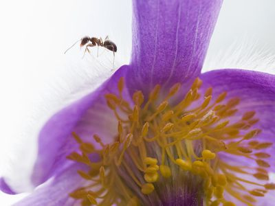 Get Ants Out of the Flower Garden