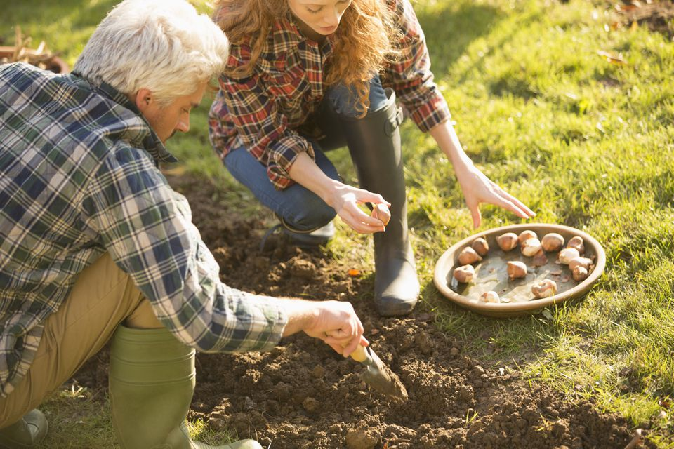 Couple planting bulbs in garden