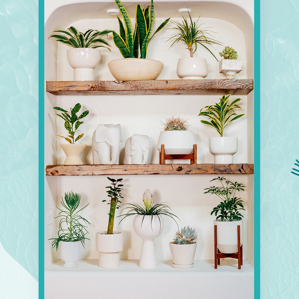 wall of plants from Justina Blakeney and Jungalow