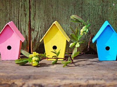 The Best Times to Put Out Birdhouses