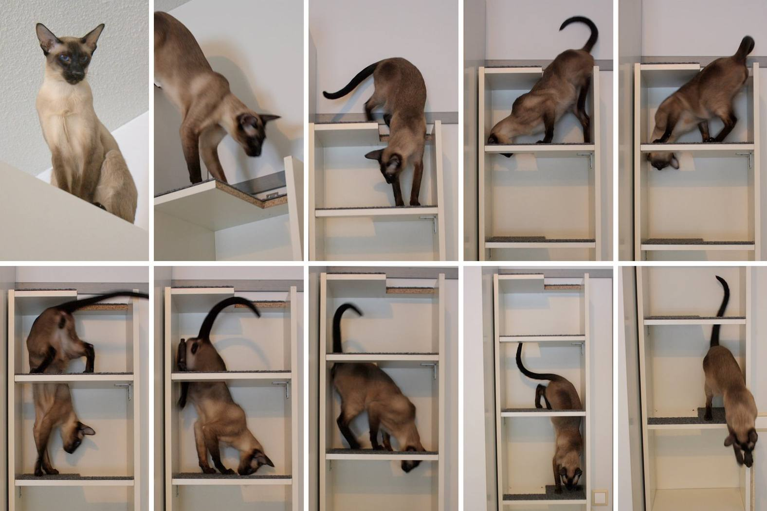 BILLY bookcase cat tree