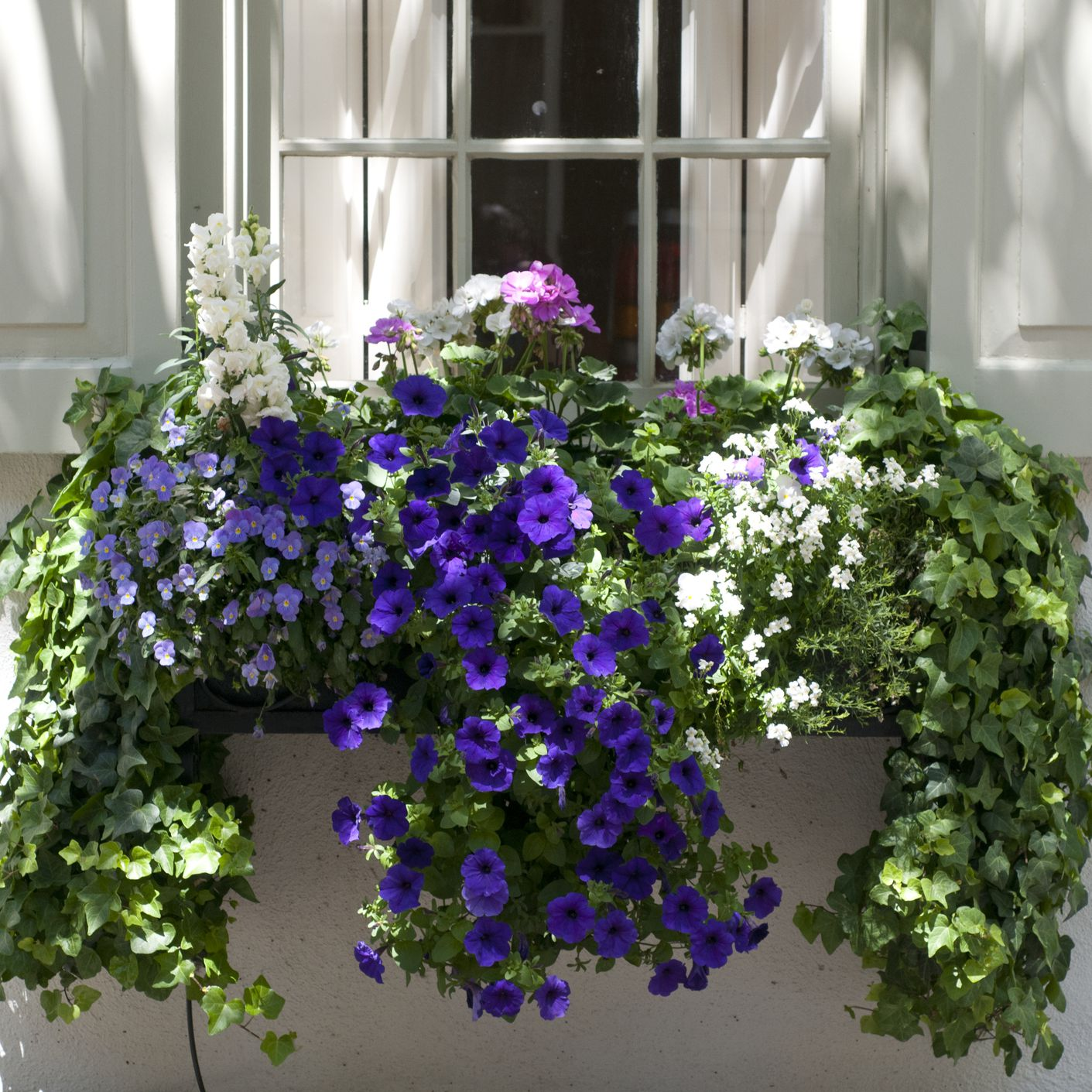 Window Box Flowers For Shady Spots
