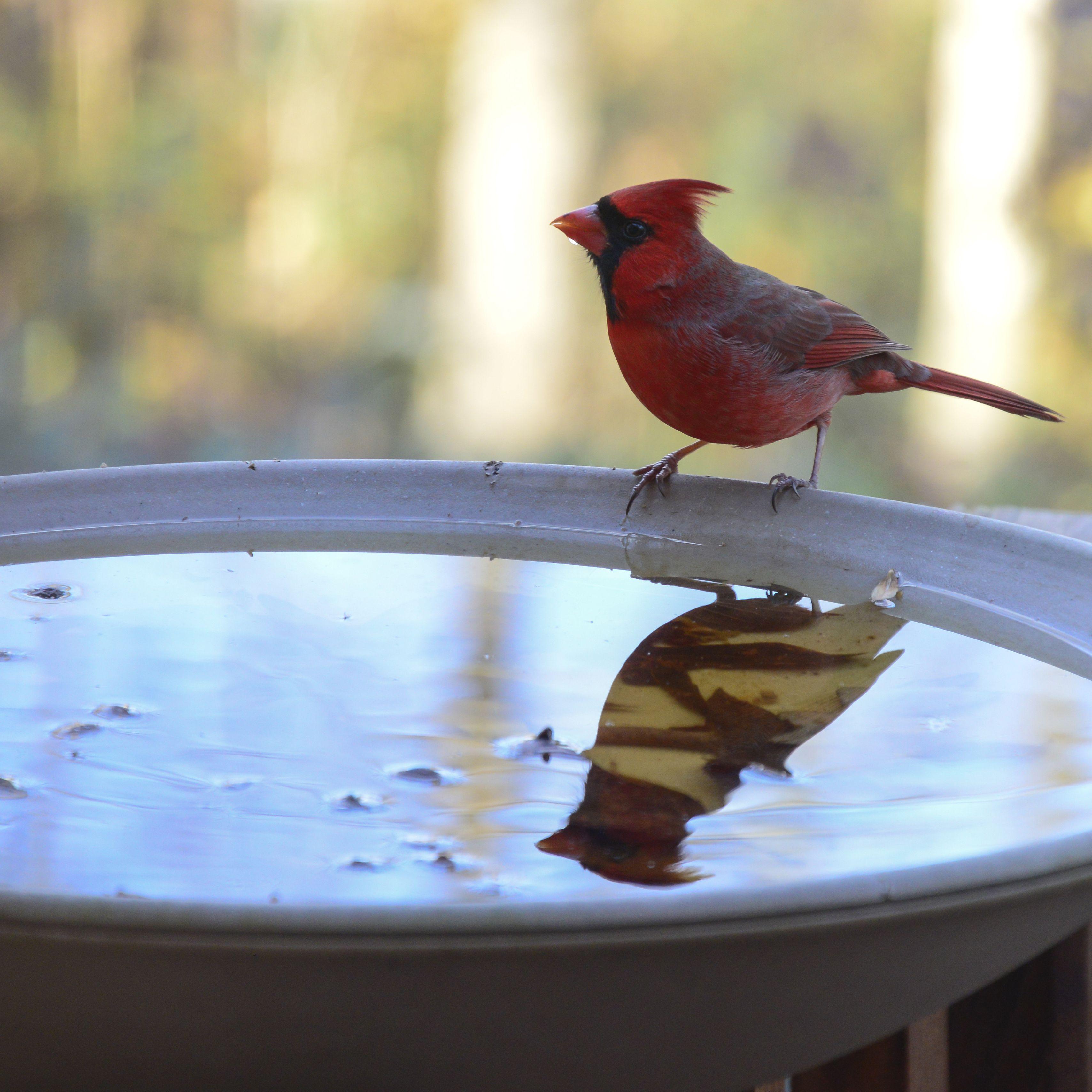 7 Best Bird Baths of 2019