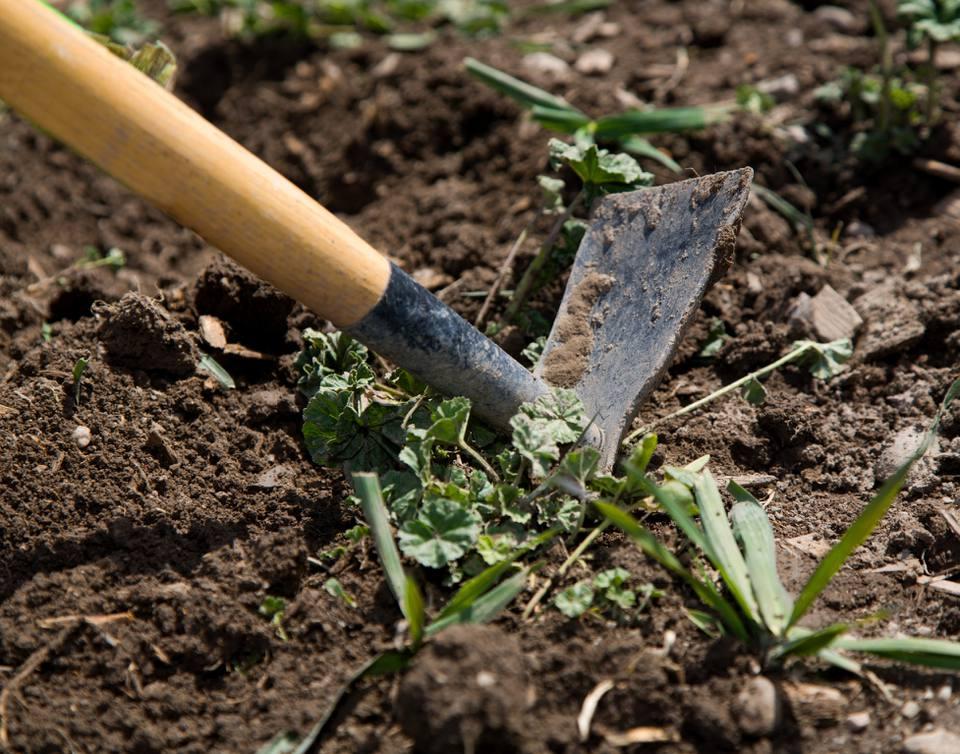 Digging up weeds