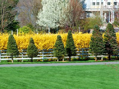 Small Backyard Trees dwarf trees are ideal choices for small yard design