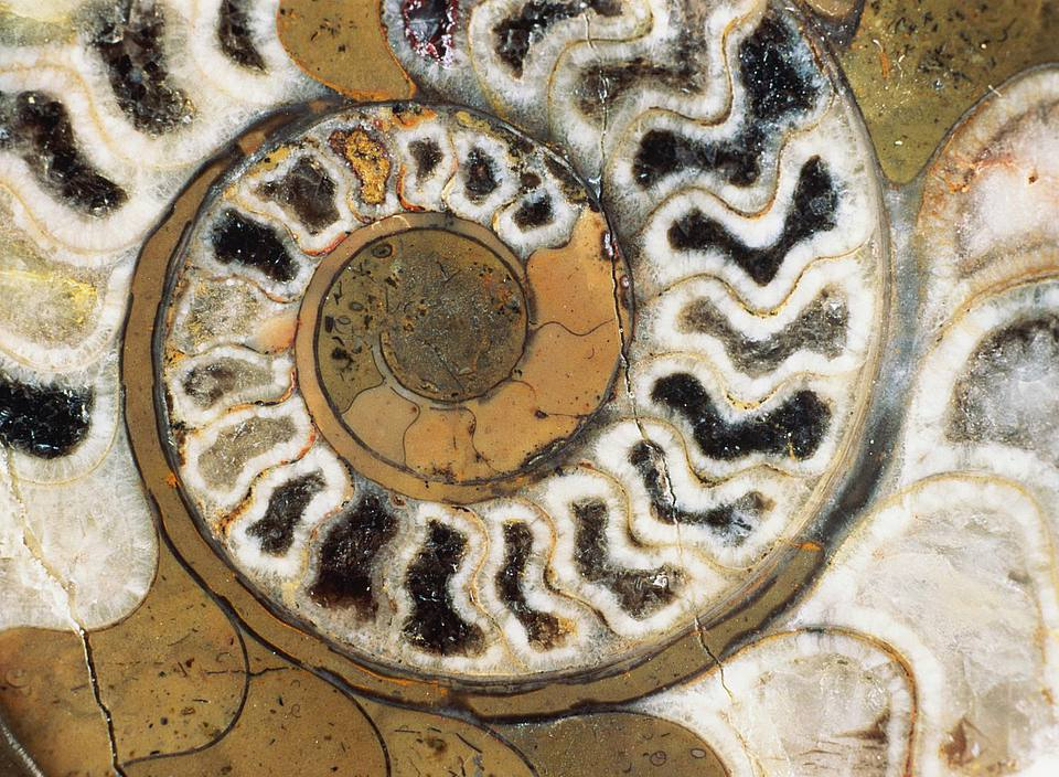 feng shui ammonite