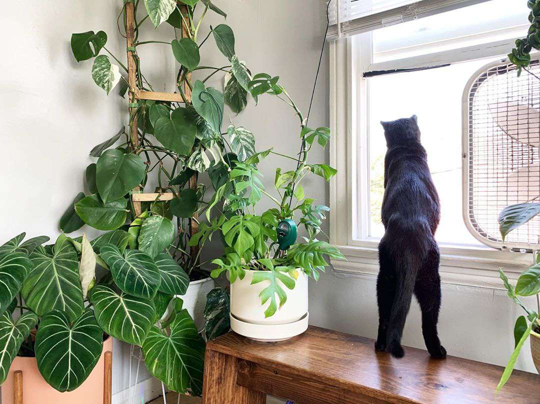 Cat looking out window by plant