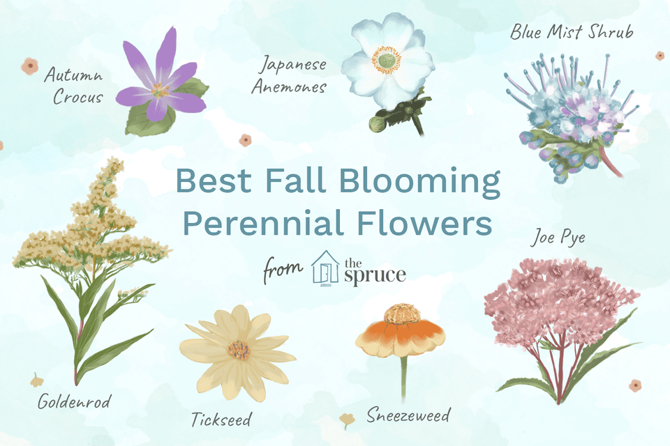 Best Fall Blooming Perennial Flower