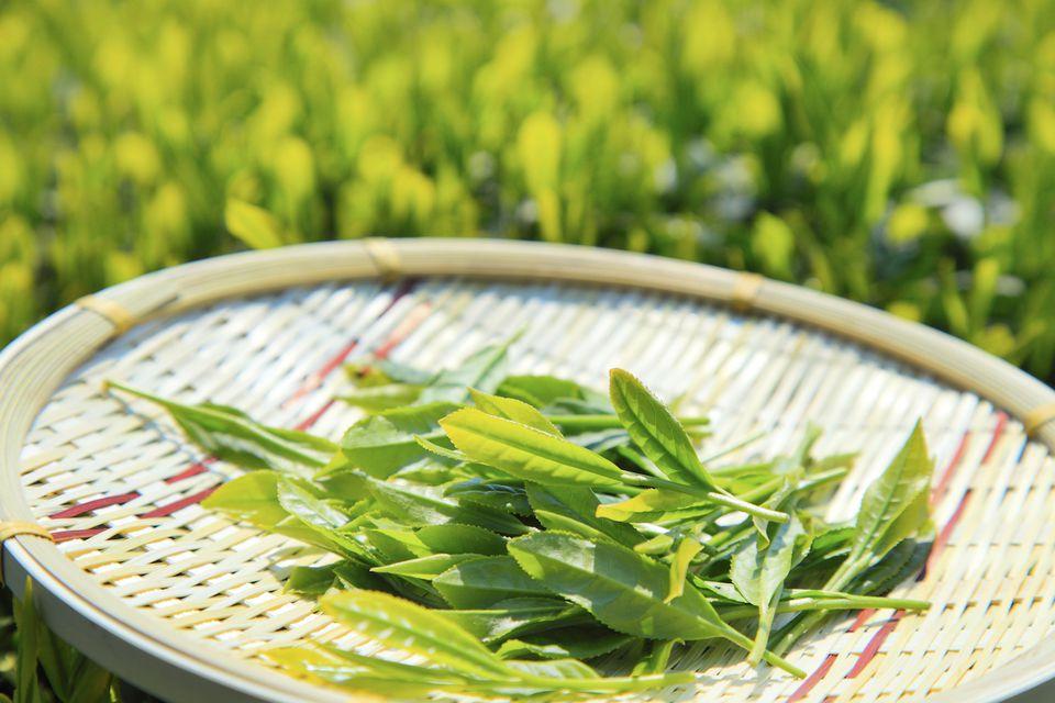 Hojas de té en una bandeja tejida