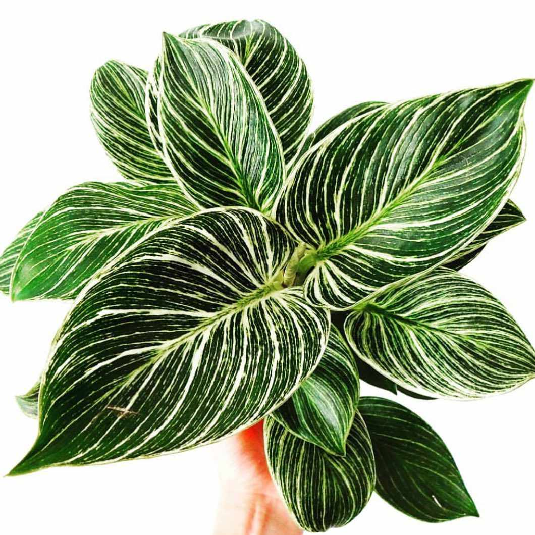 A hand holding a plant