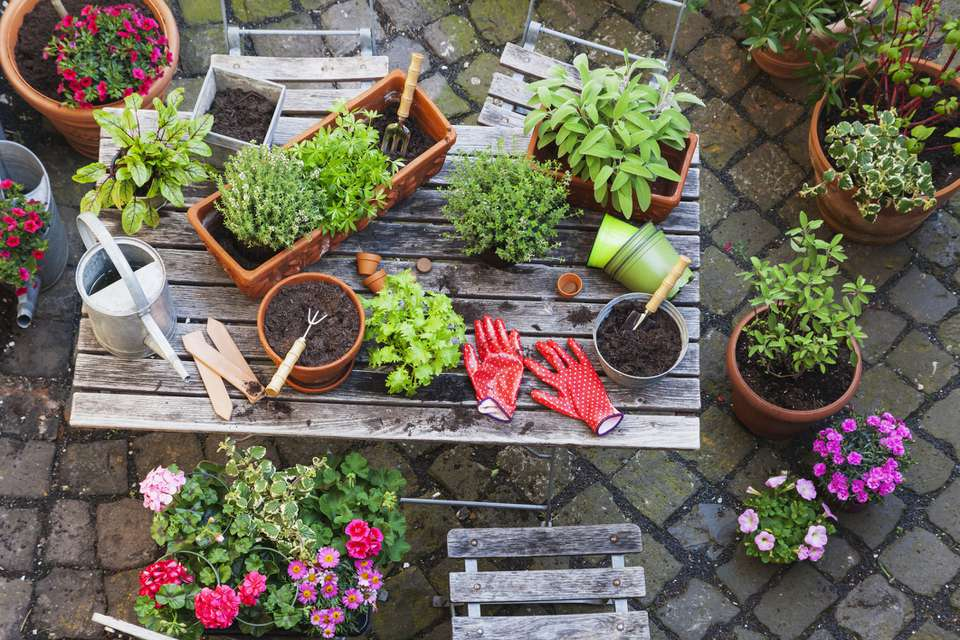 overhead shot of wooden table on patio covered with potted herbs and gardening tools