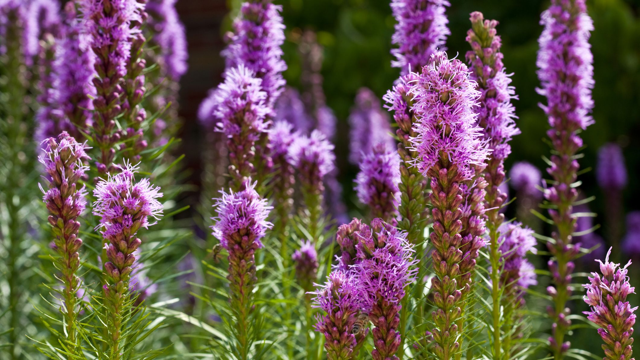 25 Plants That Grow In Clay Soil