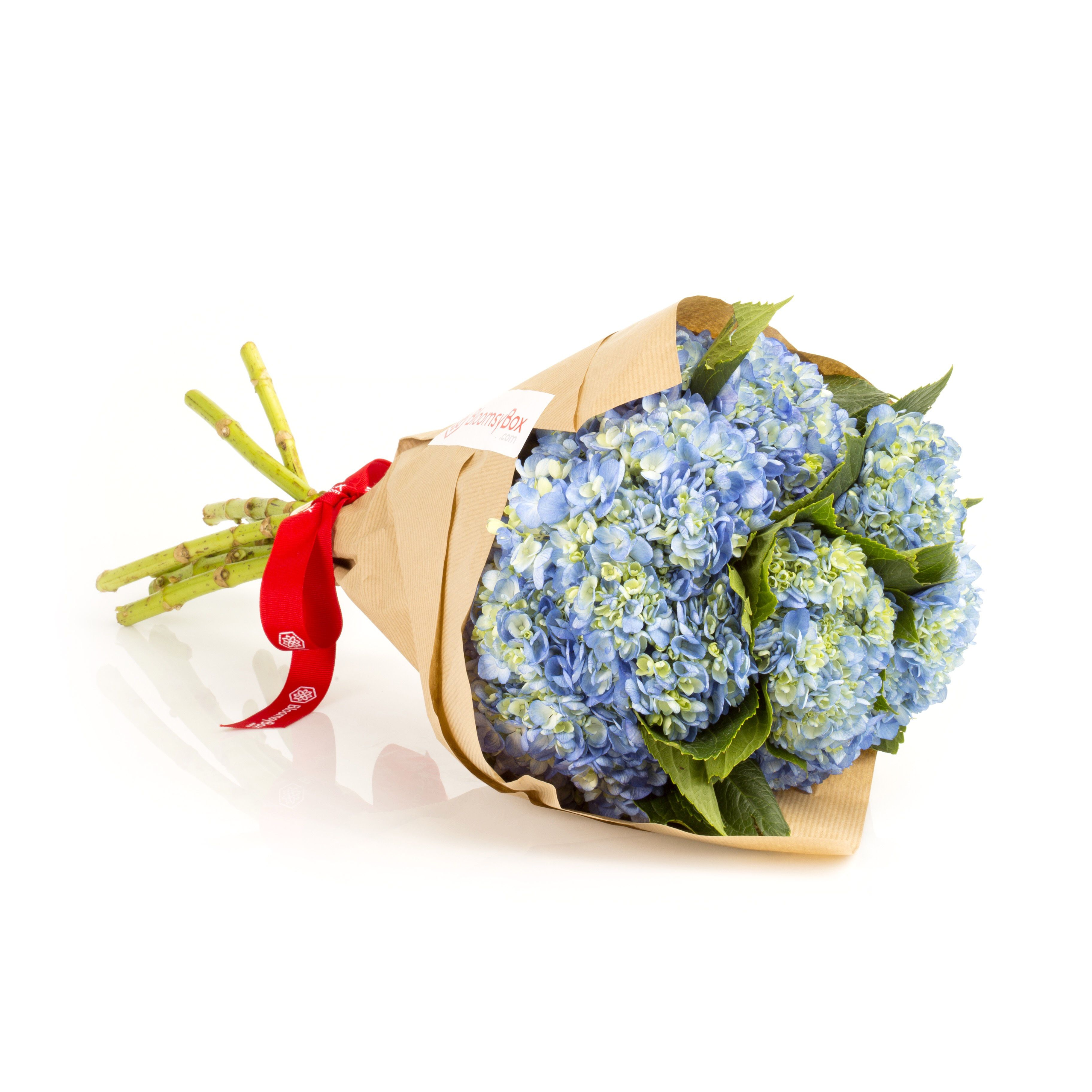 Best place to buy roses online-4725