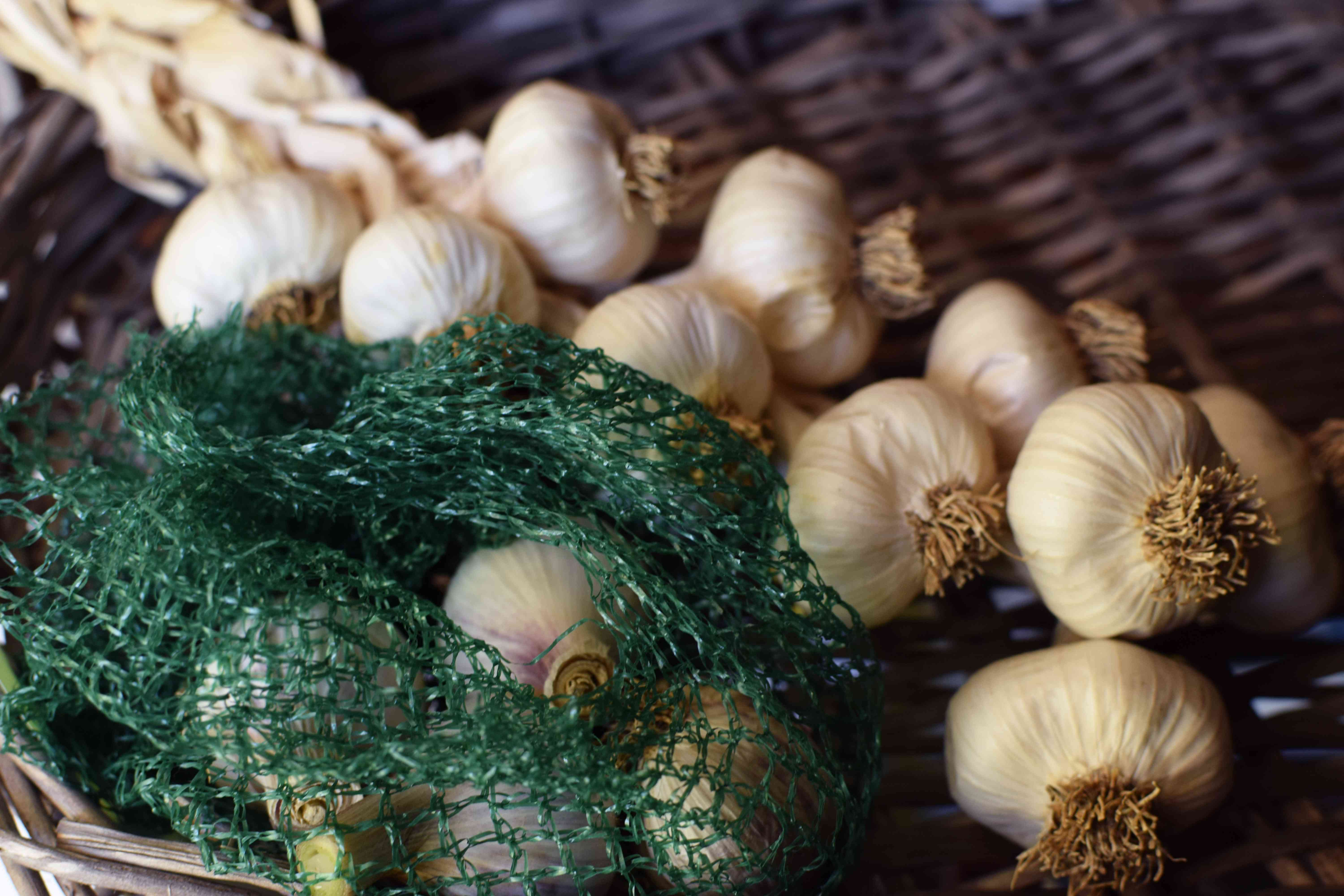 Harvested garlic stored in green mesh bag on wicker tray