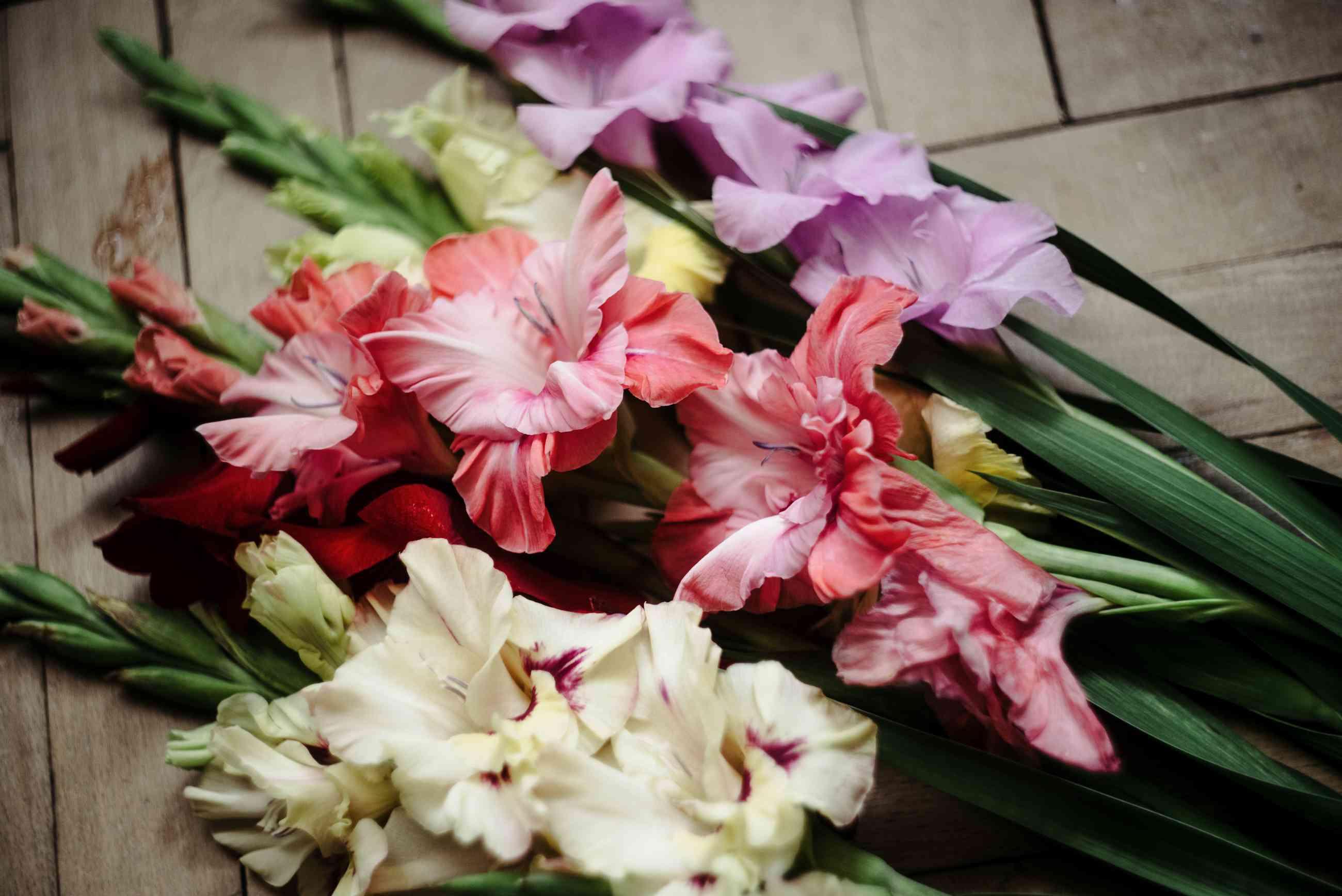 beautiful bouquet of colorful gladioli