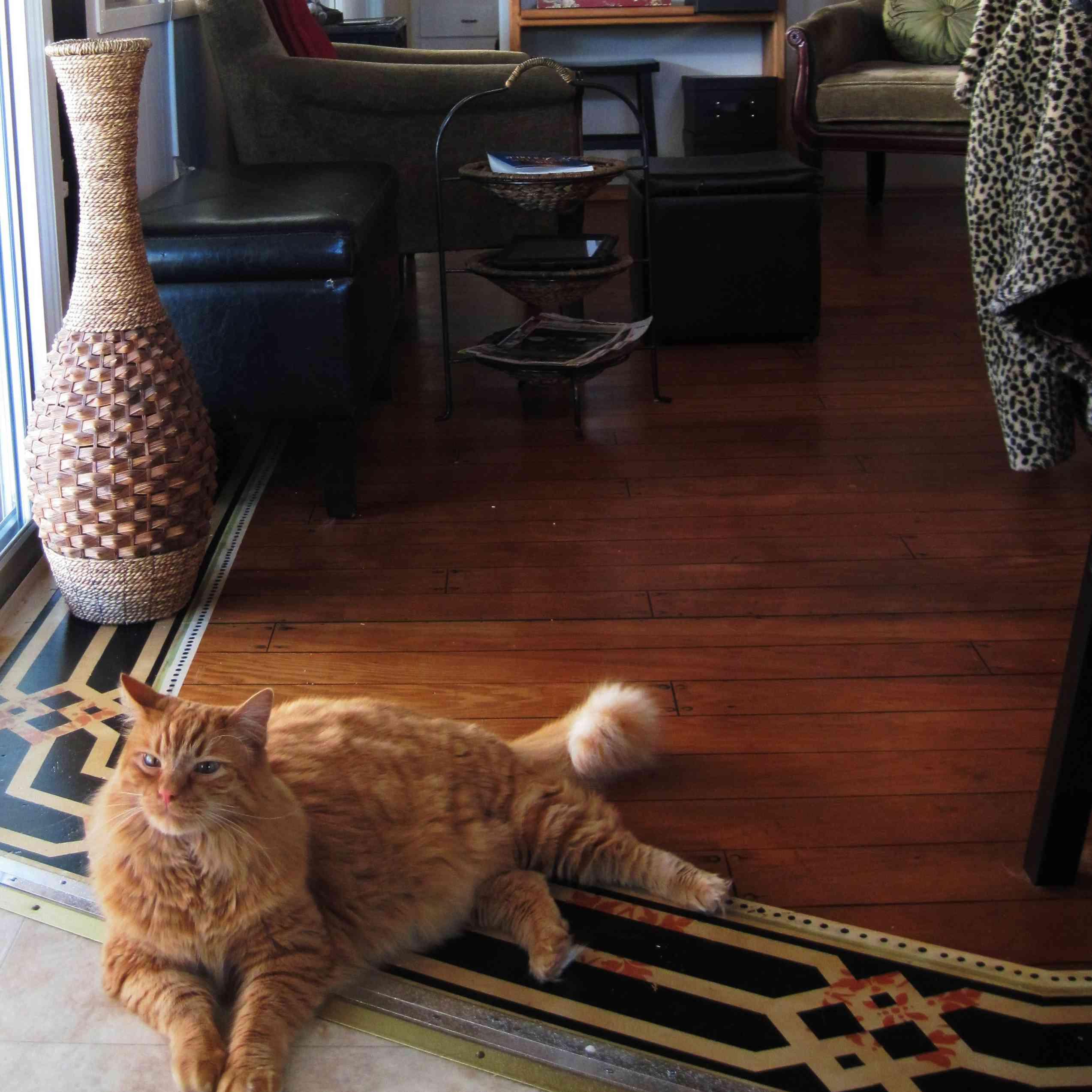 Cat_Floor.jpg
